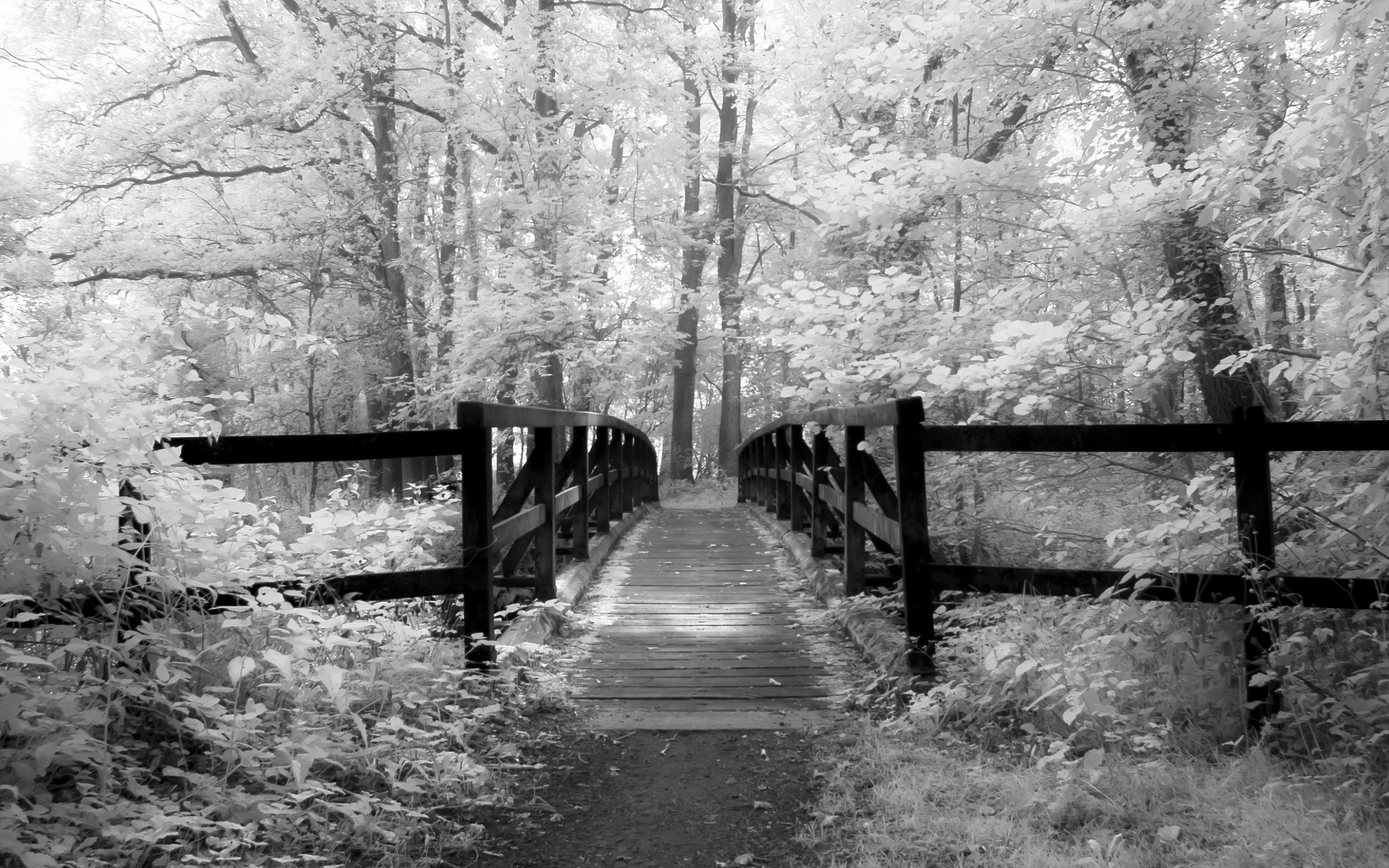 Bridge into Wooded Vale