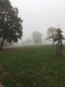 Walk and Talk Therapy, Autumn creeps in the mist